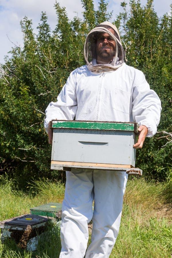 男性蜂农运载的蜂窝箱子 库存图片