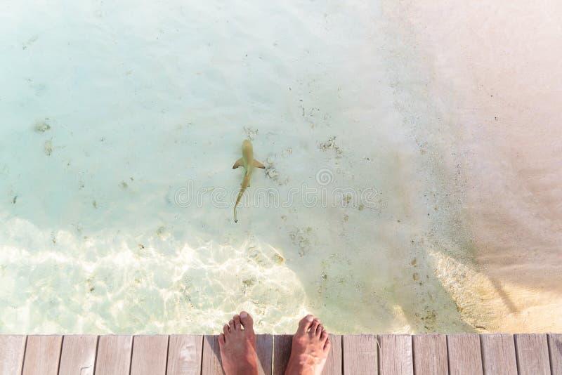 男性赤脚个人观点在一个码头的有礁石鲨鱼的在水中 免版税库存图片