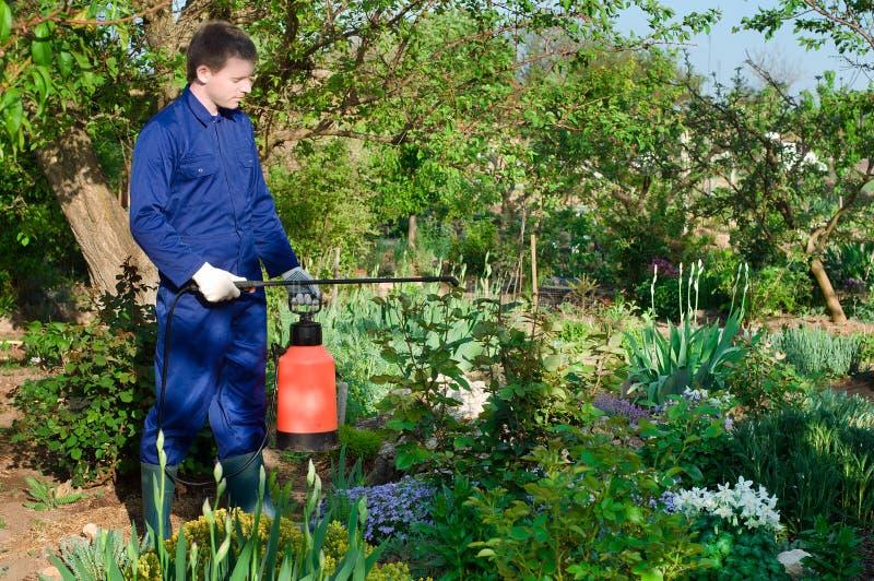 男性从寄生虫的花匠保护的植物 库存图片