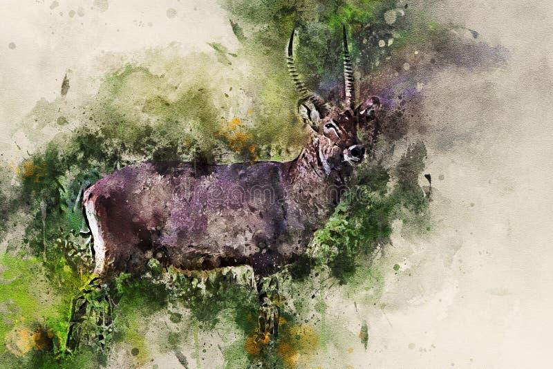 男性waterbuck或水羚属ellipsiprymnus在大草原 库存图片