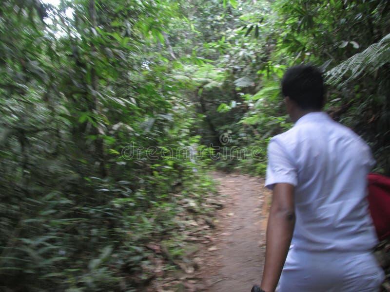 男生参观Sinharaja雨林 库存图片