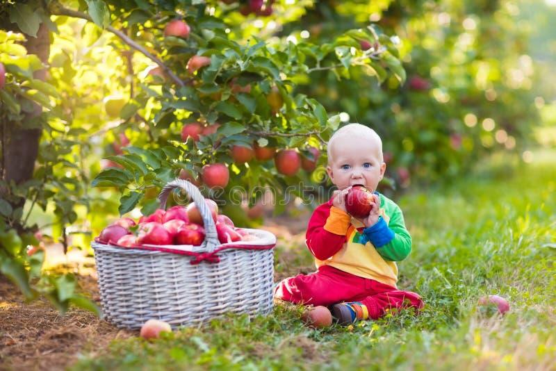 男婴采摘苹果在果子庭院里 库存图片