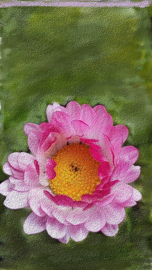 画在绿色背景的一朵桃红色花 皇族释放例证