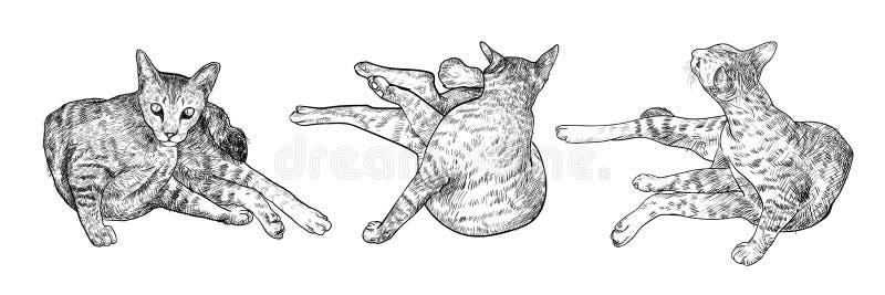 画的三猫 向量例证