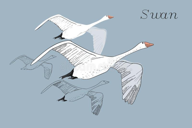 画的飞行的天鹅的例证 手拉,与鸟的乱画图形设计 在蓝色背景的被隔绝的对象 图库摄影