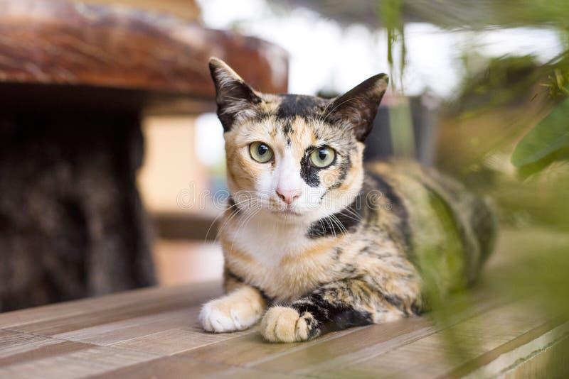 画象年轻人猫 图库摄影