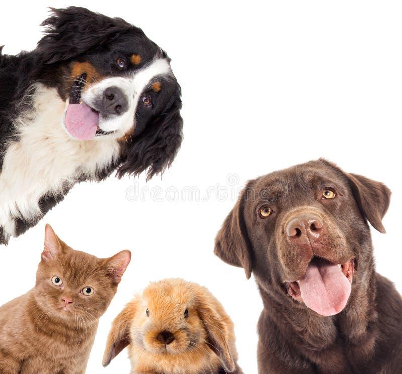 画象狗和小猫和兔子看 免版税图库摄影