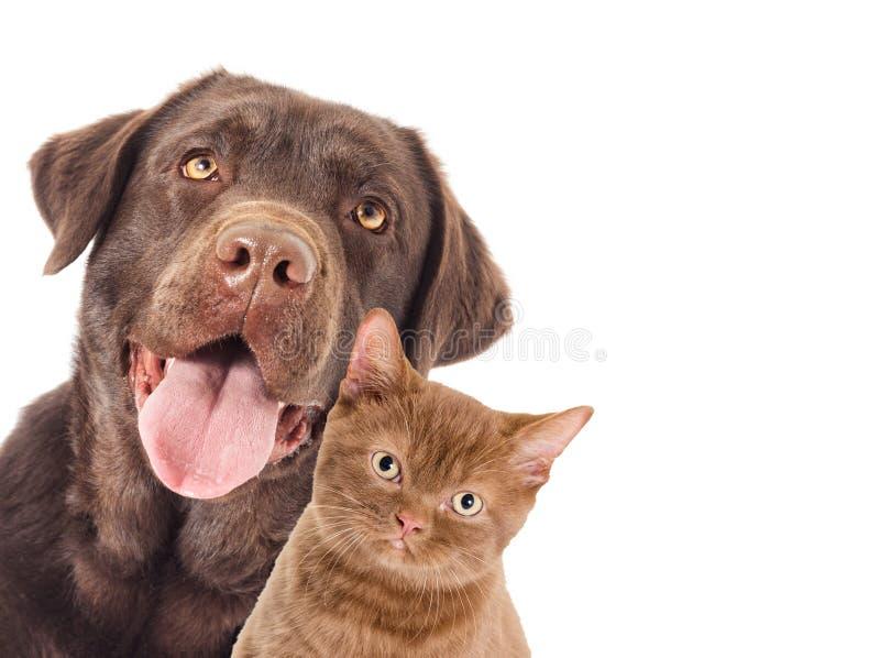 画象狗和小猫看 库存图片
