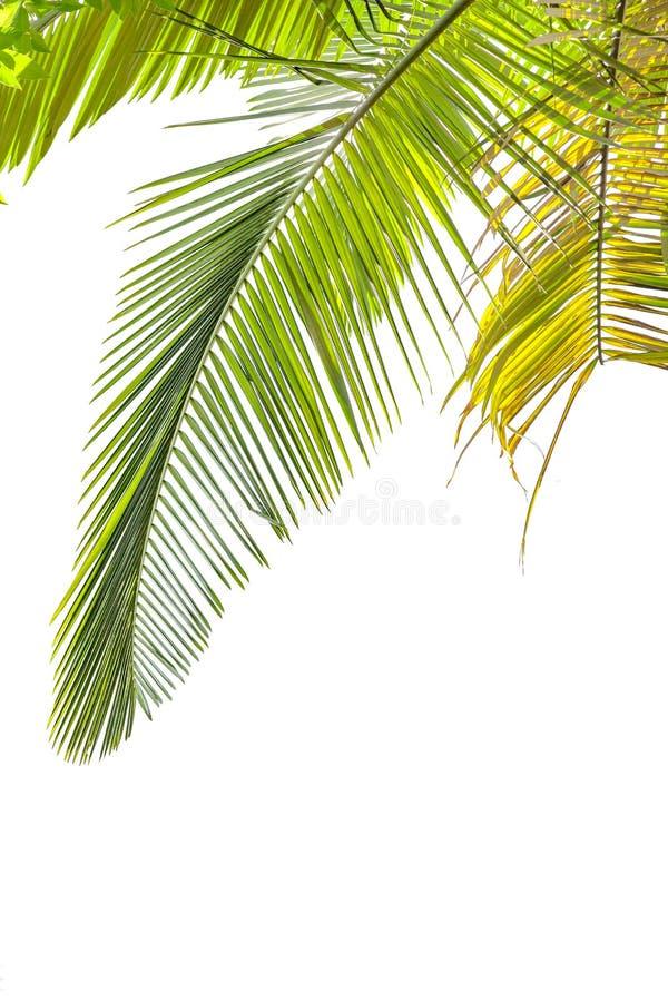 留下棕榈树 图库摄影