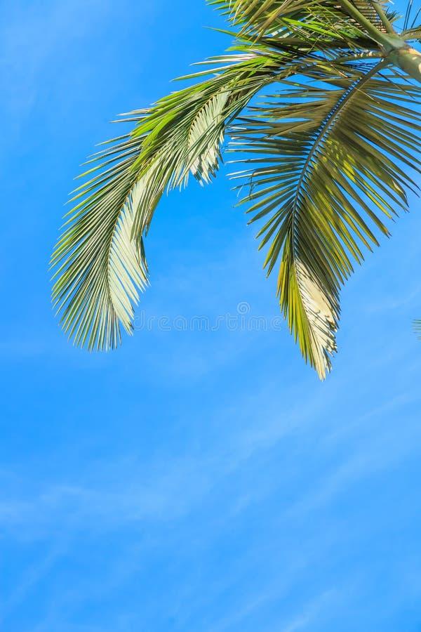 留下棕榈树 免版税库存图片