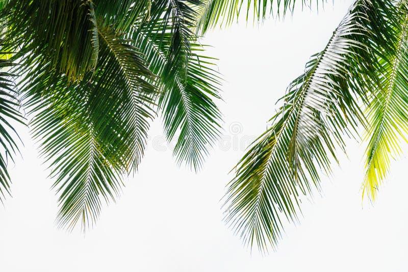 留下椰子 免版税图库摄影