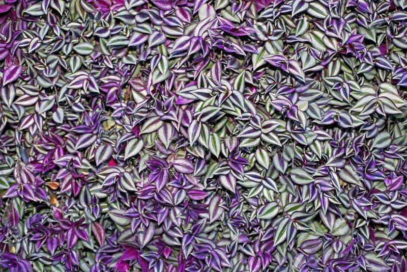 留下紫色 图库摄影