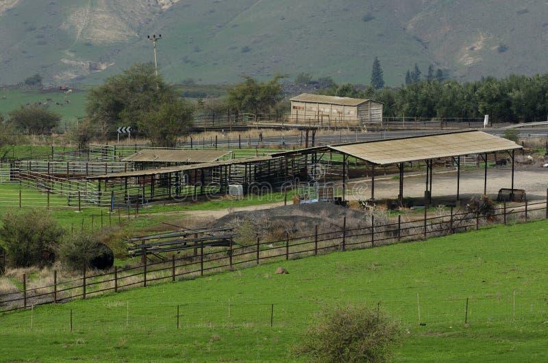 畜栏和大农场在戈兰高地 库存图片