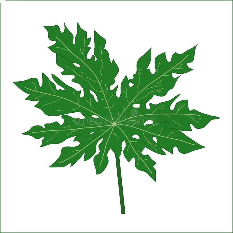 番木瓜叶子 向量例证