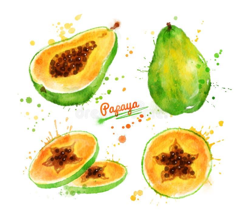 番木瓜的水彩例证 皇族释放例证