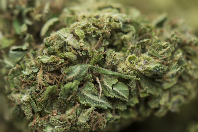 医疗大麻特写镜头 免版税库存照片