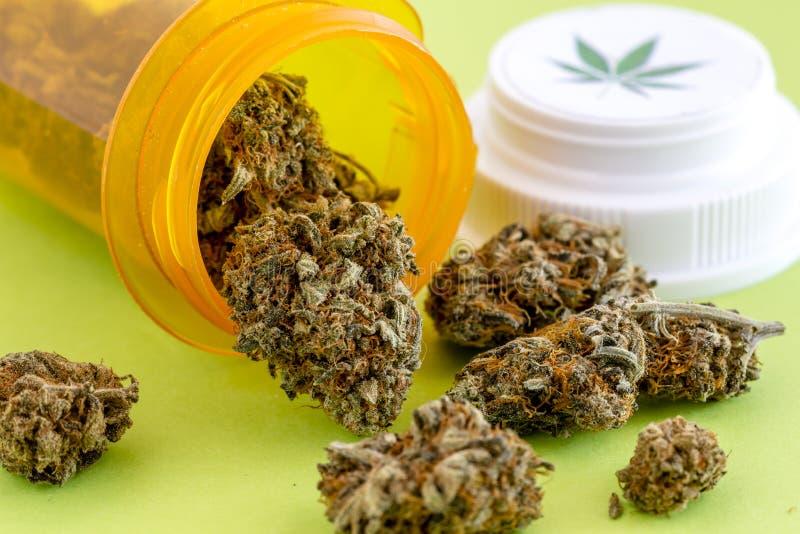 医疗大麻芽和种子 免版税图库摄影