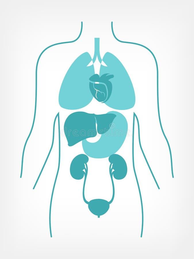 医疗Infographic。 皇族释放例证