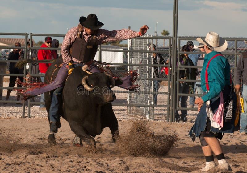 疯狂的公牛专业圈地公牛骑马 库存图片