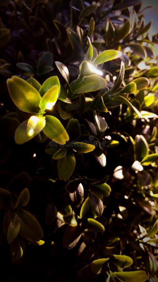 疯狂的植物 免版税图库摄影