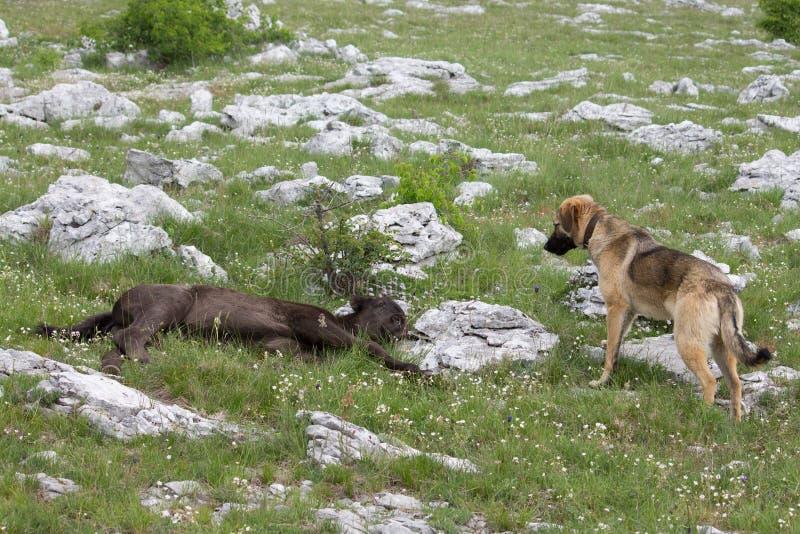 疲乏的幼小冷和好奇狗 免版税库存图片