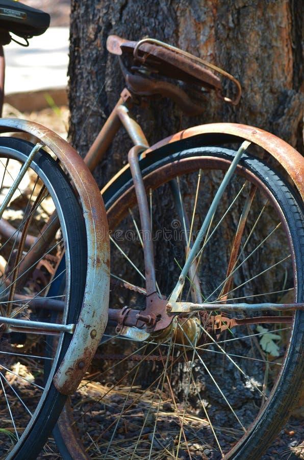 疲乏的老自行车倾斜反对树 免版税图库摄影