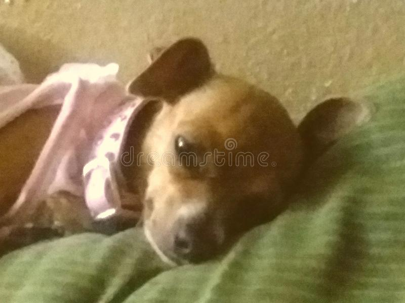 疲乏的Gidgette 库存图片