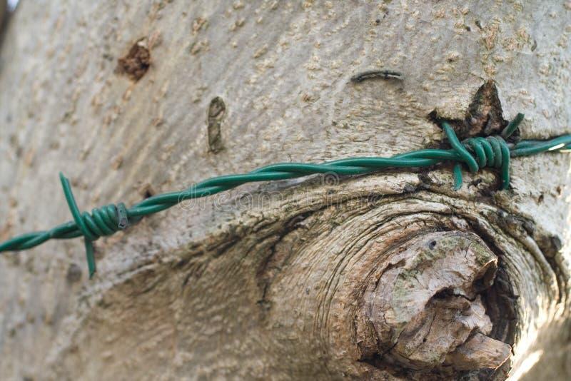 疼的结构树 免版税库存图片
