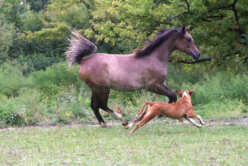 人与马的色情_疾驰在有牛头犬的牧场地的母马