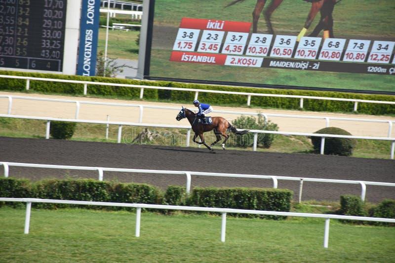 疾驰在赛马跑道下的赛马和骑师 免版税库存照片