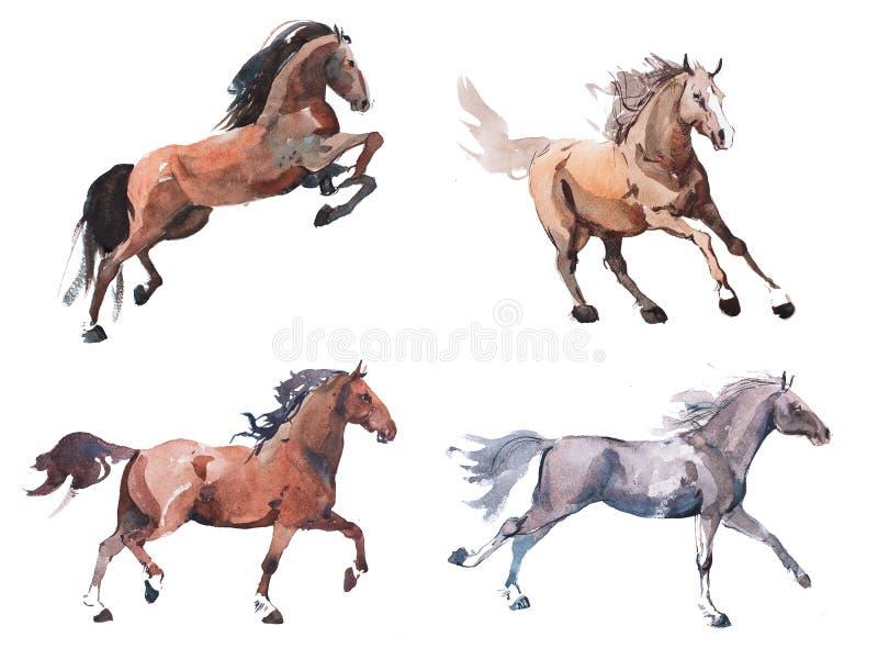 疾驰的马,自由连续野马水彩画水彩绘画  库存例证