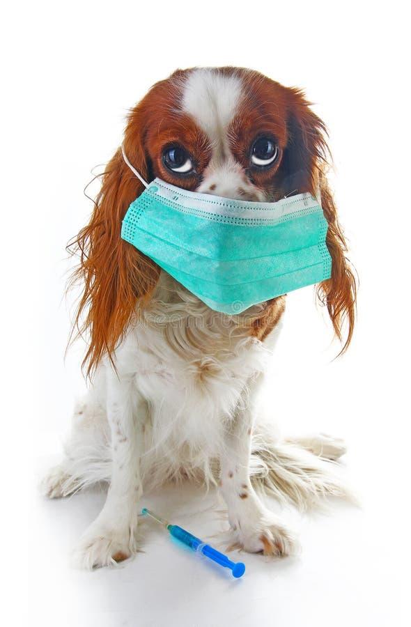 病态的狗小狗照片例证 在小狗的动物宠物医生狩医面具 与射入接种的狗 动物爱犬 免版税库存图片