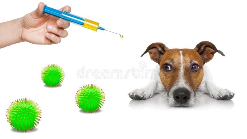 病犬病,冠状病毒遍布 图库摄影