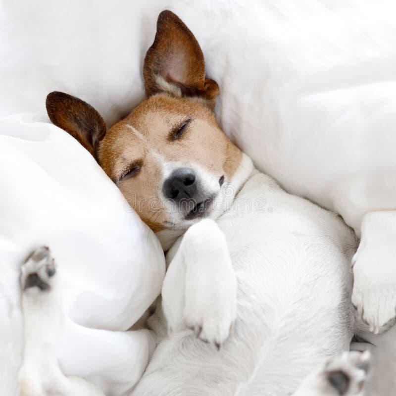 病的不适或睡觉狗 图库摄影