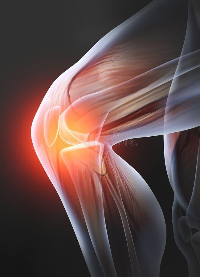 痛苦的膝盖关节,医疗上3D例证 库存图片
