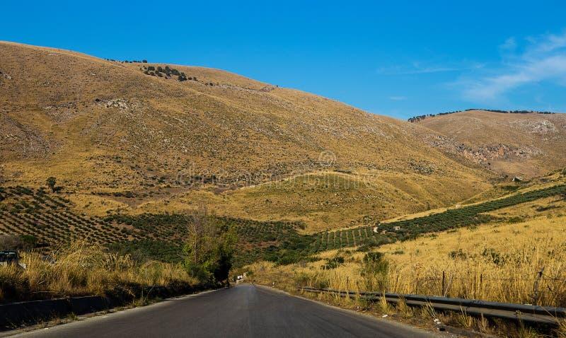 贫瘠小山和橄榄树种植园 免版税库存照片