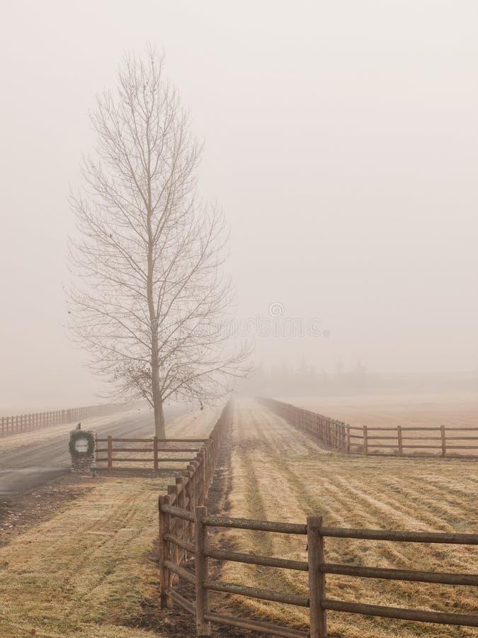 贫瘠树和篱芭在雾 免版税库存图片