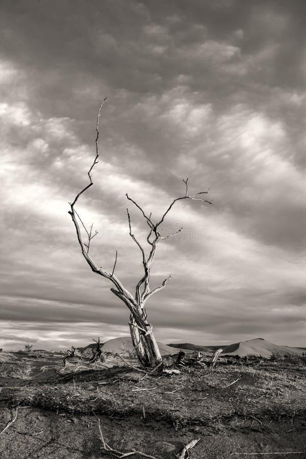 贫瘠树的剧烈的图象。 库存图片