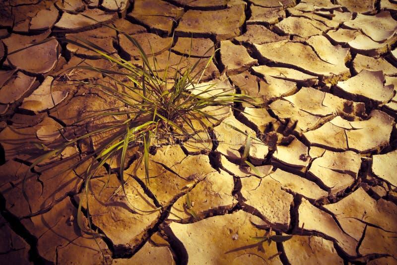 瘠薄土地由太阳烧了:饥荒和贫穷概念图象 免版税库存图片