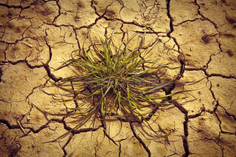 瘠薄土地由太阳烧了:饥荒和贫穷概念 免版税图库摄影