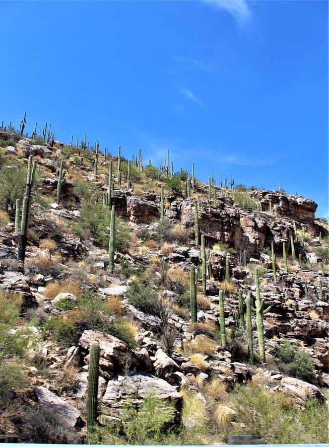 登上莱蒙,圣卡塔利娜山,科罗纳多国家森林,图森,亚利桑那,美国 图库摄影