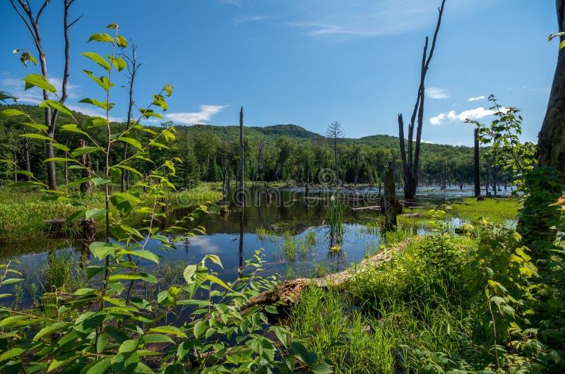 登上van hoevenberg足迹的海狸池塘在adirondack 库存照片