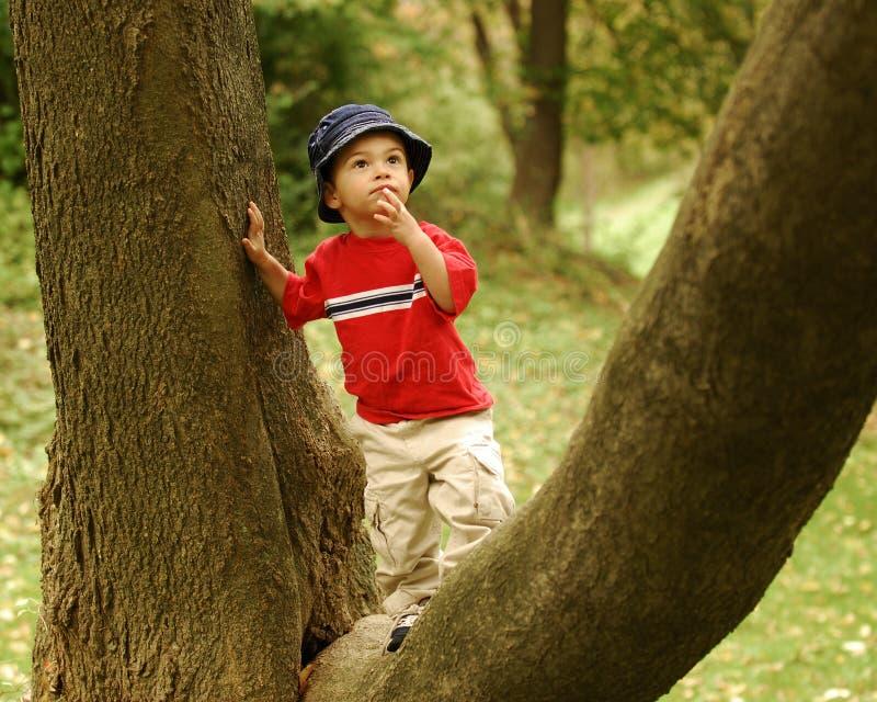 登山人少许结构树 免版税库存照片