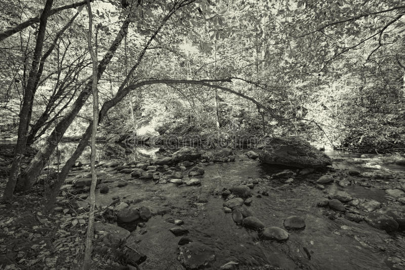 黑白伟大的Smokey山公园的森林 图库摄影