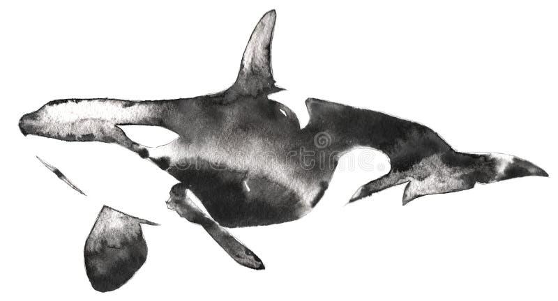 黑白单色绘画用水和墨水得出虎鲸例证 向量例证