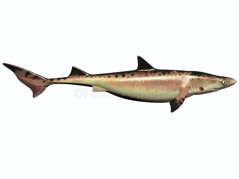 白垩纪鲨鱼 向量例证