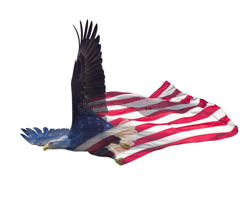 白头鹰两次曝光在美国国旗的 免版税图库摄影