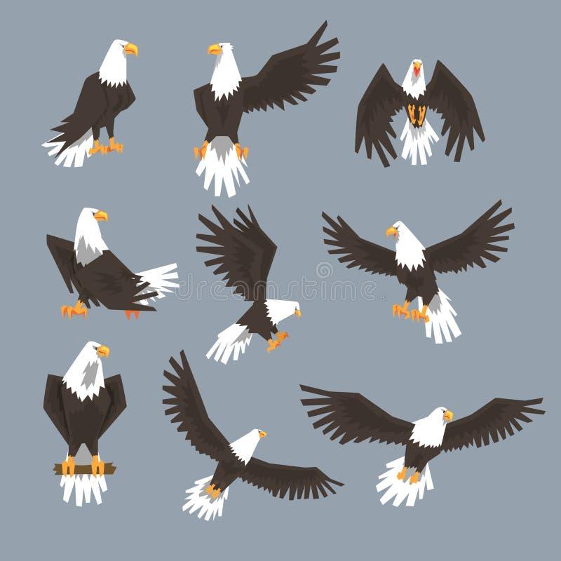 白头鹰在灰色背景的映象集 向量例证