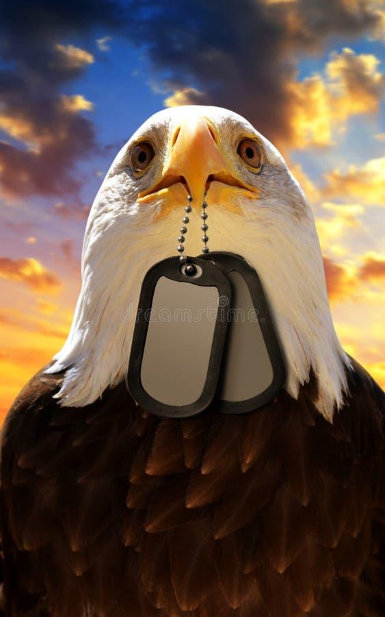 白头鹰拿着在他的额嘴的卡箍标记,在背景日落天空 库存照片
