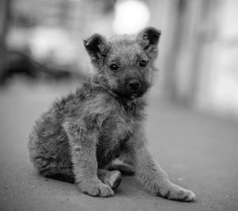 黑白孤独的无家可归的狗 库存照片